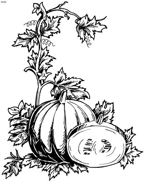 coloring pages of pumpkin vines tree vines coloring pages clipart best
