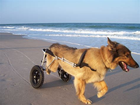 wheelchairs for dogs cruisin canines wheelchairs for dogs the how to