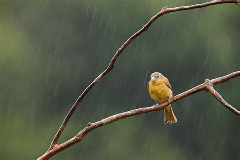 birds of costa rica fehrle photography blog