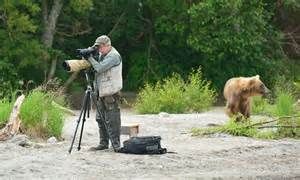 Photographer sets up tripod unaware there is a giant bear