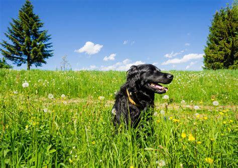 urlaub alpen österreich urlaub mit hund in 214 sterreich