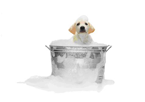 dog bathtubs for home use my pause 4 paws