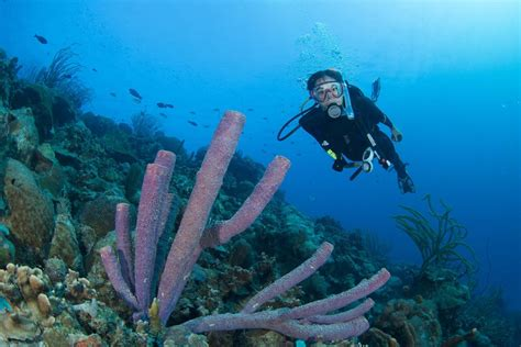Kaos Diving Padi 2 five more dives advanced open water diver