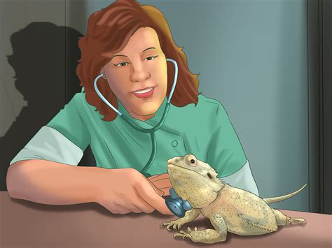 bearded dragon heat l wattage how to care for bearded dragons with pictures wikihow