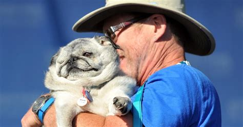 ugliest pug in the world grove the pug in the world s ugliest competition photos the 2015 world s
