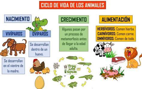 did 224 ctica de ciencias naturales los animales y su peligro imagen sobre ciclo de vida animal ciclo de vida del