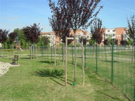 ufficio ambiente comune di firenze quasi 200 nuovi alberi per il comune di scandicci gonews it