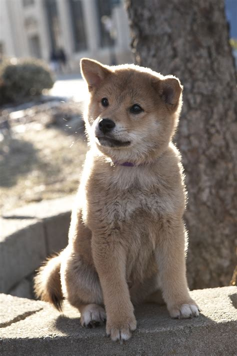 hachi the hachi the the real story quotes