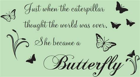 butterfly quotes part 1 weneedfun