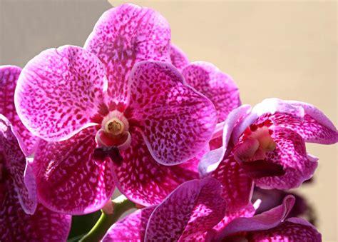 piante con fiori fucsia fiori fucsia stratfordseattle