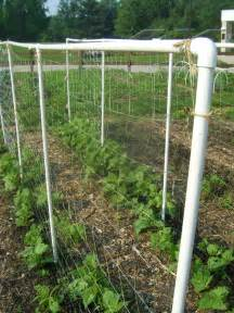 Plant Trellis Trellises On The Up And Up Fishy Plants