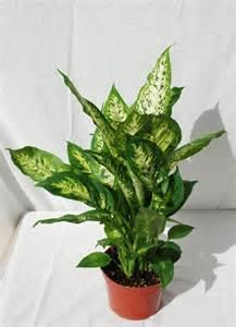Indoor Houseplants Foothill Tropicals Inc Indoor Tropical House Plants