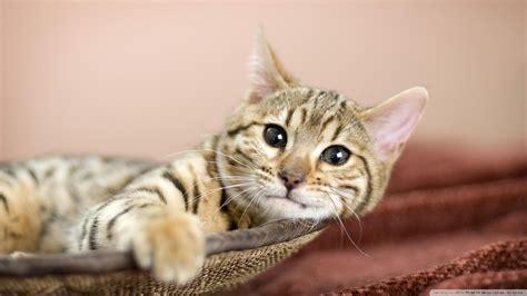cat resistant wallpaper download relaxing wallpaper 1920x1080 wallpoper 450120