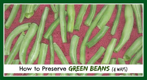 how to preserve green beans 4 ways the homestead garden the homestead garden