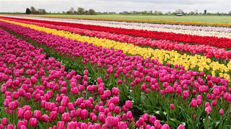 Beautiful Flowers Garden In The World The Most Beautiful Garden In The World S Keukenhof Gardens