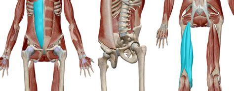 muscoli sedere curva lombare e glutei project invictus project invictus