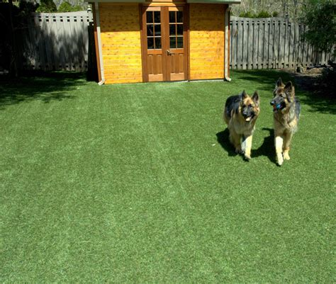 do dogs need grass backyard want a dog friendly yard consider turfing it toronto star