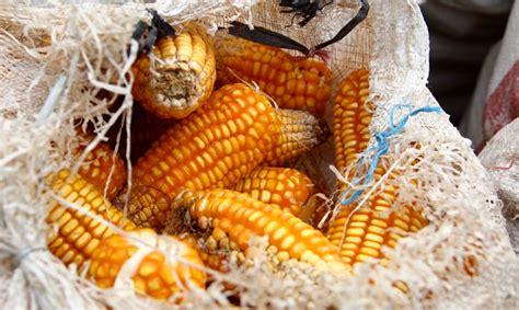 Multidimensi Ketahanan Nasional perkuat ketahanan pangan gali sumber lokal mongabay co id