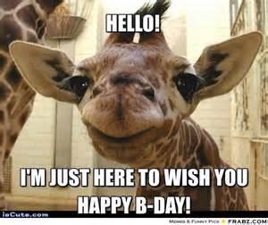 Giraffe Birthday Meme - hello baby giraffe meme generator captionator