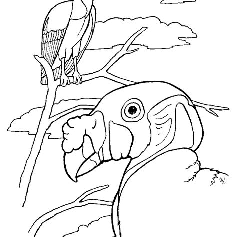 king vulture colouring pages coloring home
