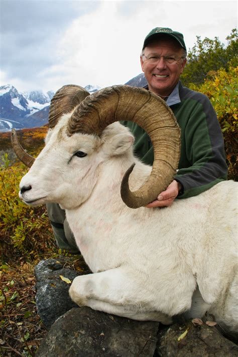 dall sheep books dall sheep photos by vast alaska