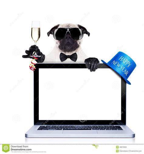 pug computer screen happy new year stock photo image 48073956