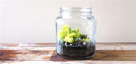 cracker jar grasshopper terrarium medium planted pots