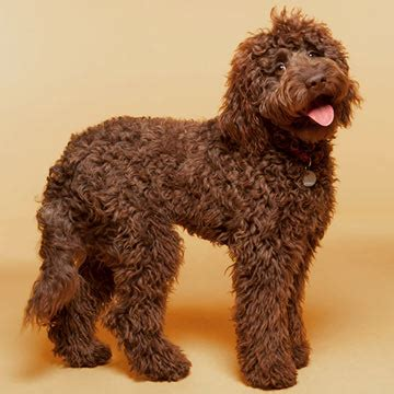 citispot shed your public hair easily best dogs for people with allergies family circle