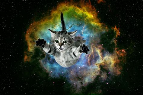 wallpaper galaxy cat galaxy cat wallpaper 32 wallpapers adorable wallpapers
