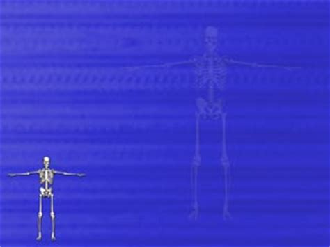 powerpoint templates free bones human skeleton 11 medicine powerpoint templates