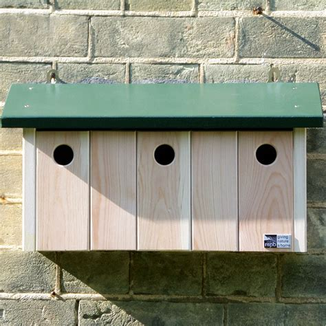 house sparrow nest box design bird house plans for sparrows