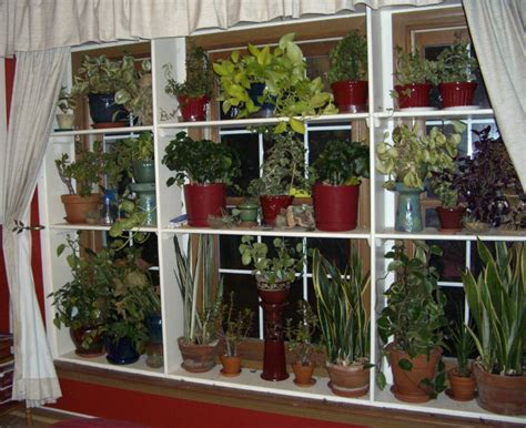 indoor window garden window plant shelves greenhouse indoor garden