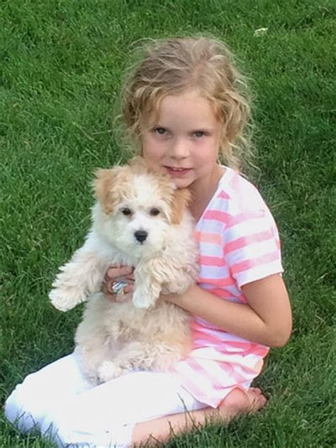 maltipoo puppies for sale in illinois customer comments about mystic creek puppies