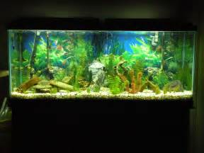 55 Gallon Aquarium Setup Ideas for Pinterest