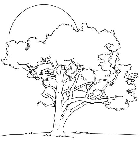 Coloring Page Tree by Coloring Pages Tree Az Coloring Pages