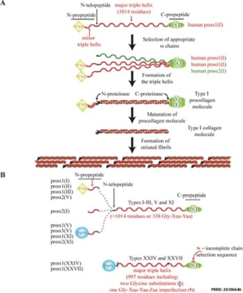 Collagen Biolo extracellular matrix 1 cellbiology