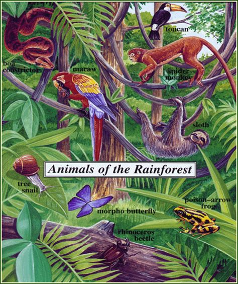 tropical forest animals and plants learning center the rainforest