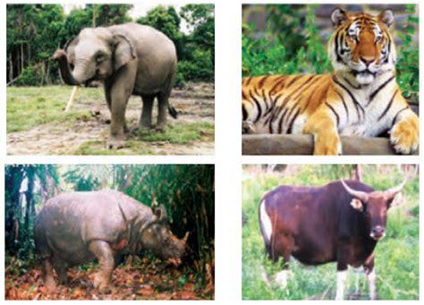 keragaman flora  fauna  indonesia kumpulan