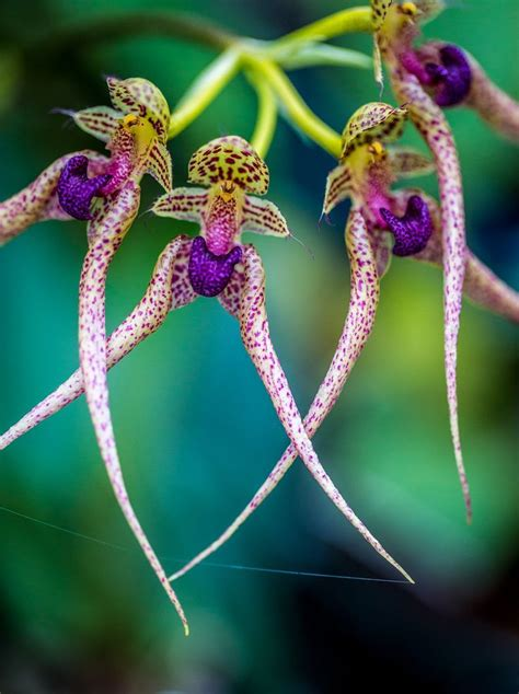 100 facts about orchids 6 incredible flowers that 10 best father s day orchid flowers images on pinterest