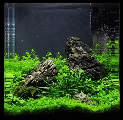 Aquascape Nano by 158 Best Images About Aquascaping Nano Aquariums On