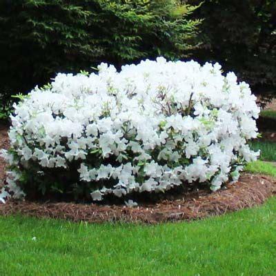Arbuste A Fleur 762 by Les 25 Meilleures Id 233 Es De La Cat 233 Gorie Arbustes 224 Fleurs