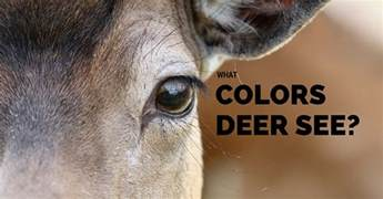 what colors do deer see bowhunting archives buckwithbow