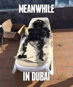 Dubai Memes - dubai where tigers are dogs dubai meme dubai dubai