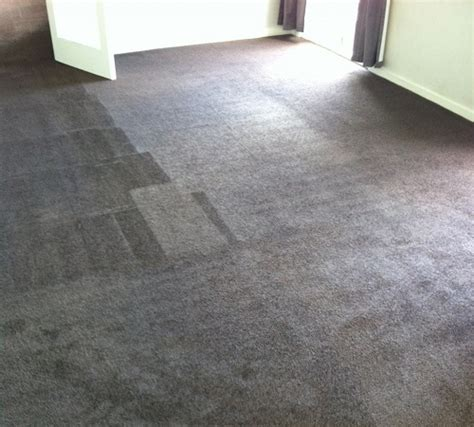 carpet cleaning south auckland carpet cleaners south