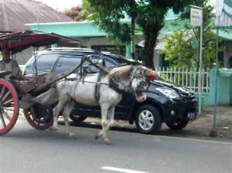 Sho Kuda Di kereta kuda di pariaman