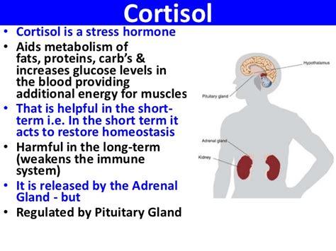 cortisol wikipedia la enciclopedia libre cortisol wikipedia autos post
