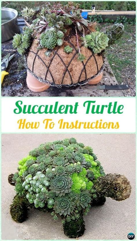 how to make a succulent turtle diy succulent turtle topiary instruction diy indoor