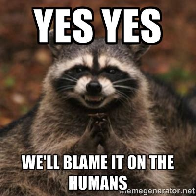 Raccoon Excellent Meme - raccoon excellent meme 28 images evil raccoon