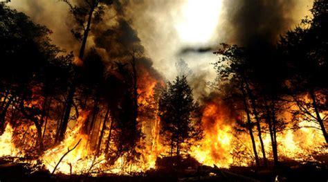 sengaja   bakar kebakaran hutan  lahan