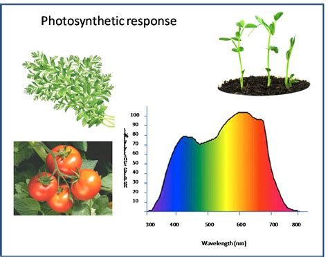 plant growth light spectrum led lighting in greenhouse horticulture wur